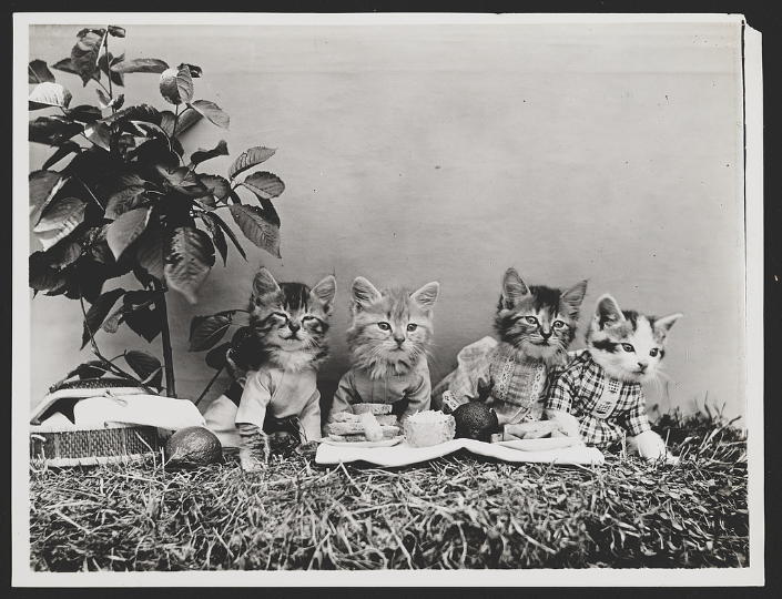 antique photo of cats